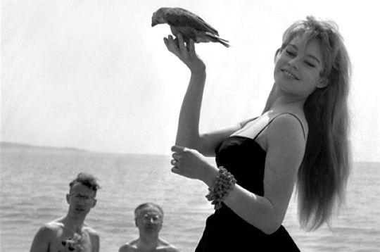 Brigitte-bardot-247864